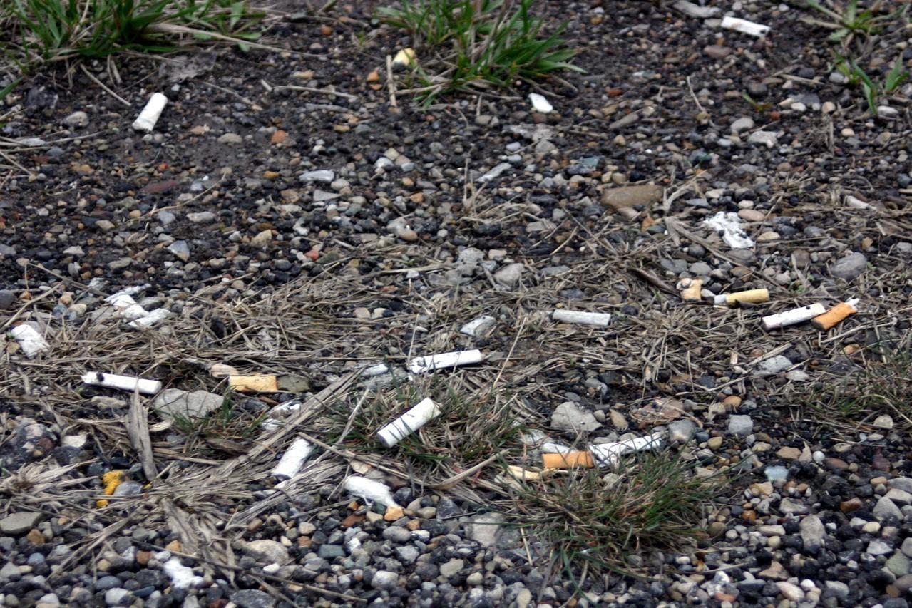 Czym są zanieczyszczenia gleby?